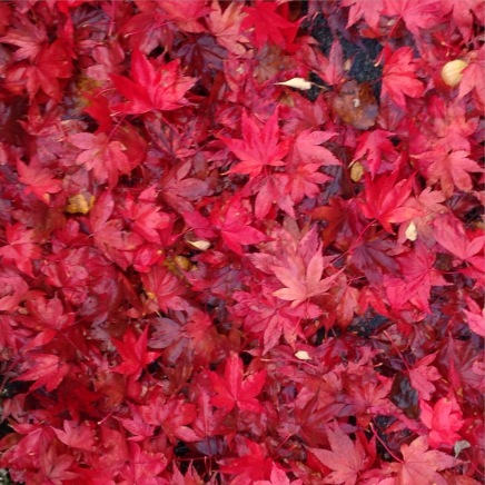 October is a festival of colour!